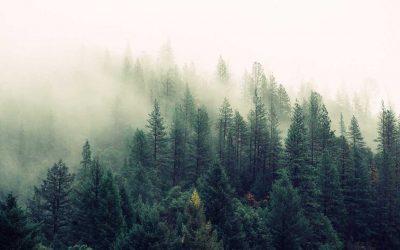 Mengenal Macam-Macam Pelayanan Jasa Pelaksana Reboisasi Hutan