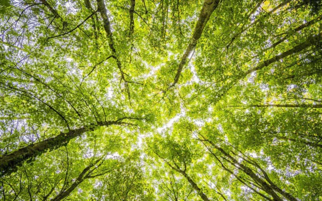Memilih Kontraktor Reboisasi Hutan sebagai Solusi Penanaman Kembali Hutan yang Gundul