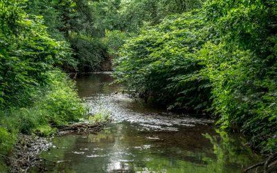 Upaya Rehabilitasi Daerah Aliran Sungai Bersama Perusahaan Rehabilitasi Daerah Aliran Sungai